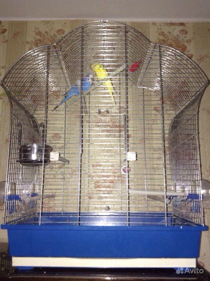 Чехол для клетки с попугаями своими руками 925
