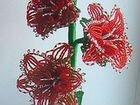 бисероплетение гладиолусы из красных бисер с пошаговым фото и видео