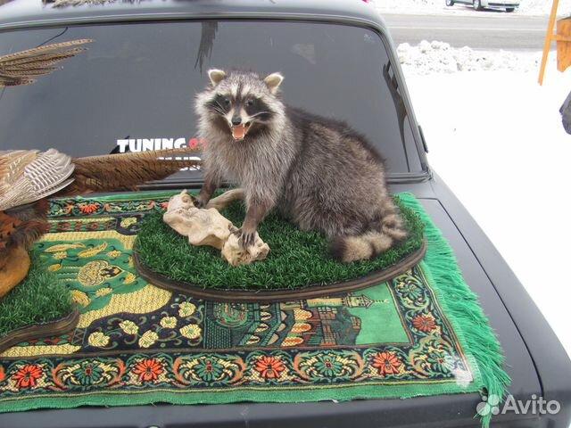 Чучела диких животных 89183875196 купить 1