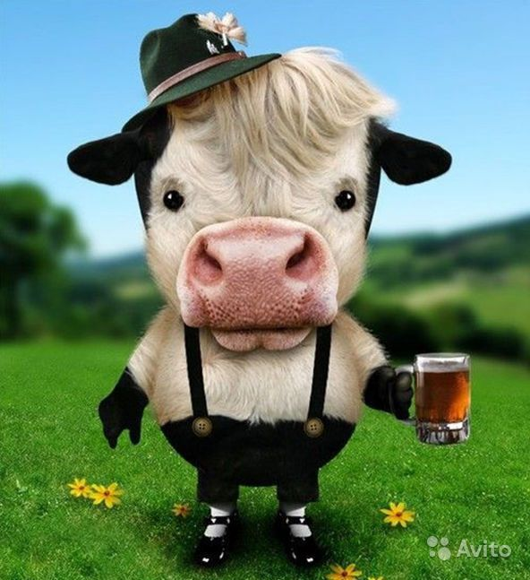 Коровы картинки приколы