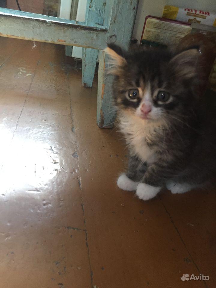 Отдадим в добрые руки котёнка. Возраст 3 недели, к