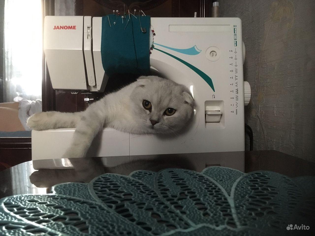 Продается Кошка - фотография № 4