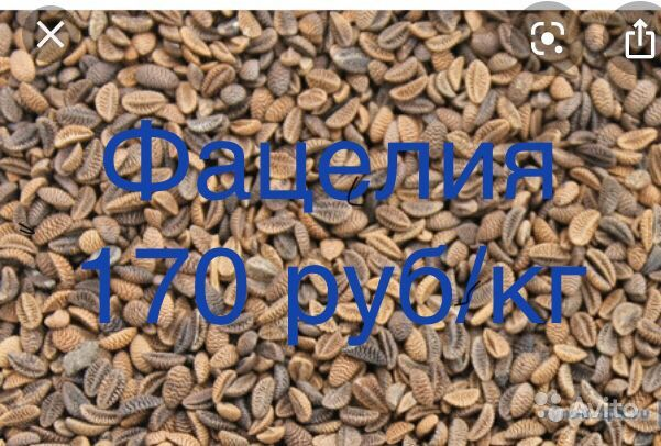 Семена трав купить на Зозу.ру - фотография № 4