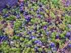 Продажа питомника с плодово-ягодными культурами