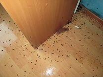 Полное уничтожение тараканов, клопов, блох