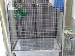Попугай корелла с огромной клеткой