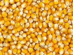 Кукуруза 4000 тонн