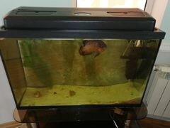 Продаётся аквариум