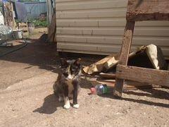 Кошечка и её детки ищут любящих хозяев