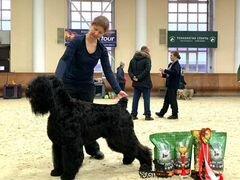 Черный терьер щенок