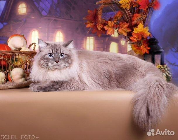 кошка для вязки сибирский кот термобелье шерсти мериноса