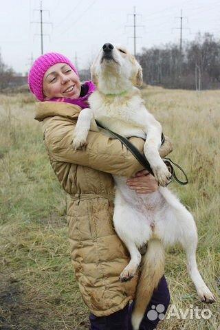 Отдам щенка девочку купить на Зозу.ру - фотография № 5