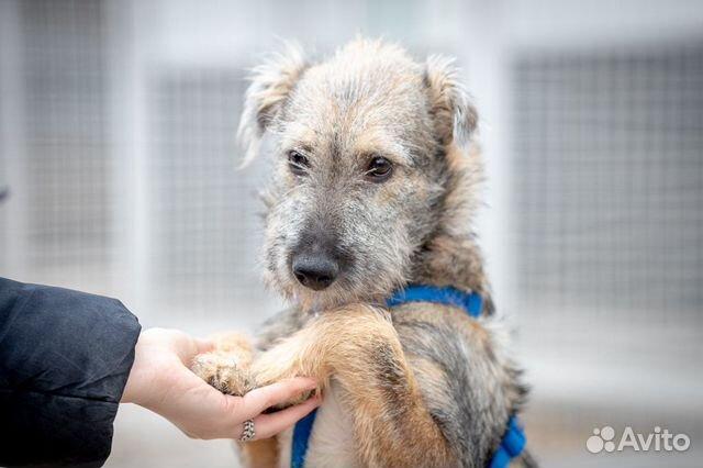 Щенок в дар, небольшая собака в дар, маленький щен купить на Зозу.ру - фотография № 2