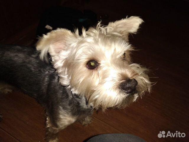 Отдам собаку в хорошие руки бесплатно купить на Зозу.ру - фотография № 1