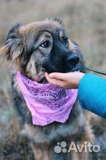 Пушистая собака в дар купить на Зозу.ру - фотография № 1