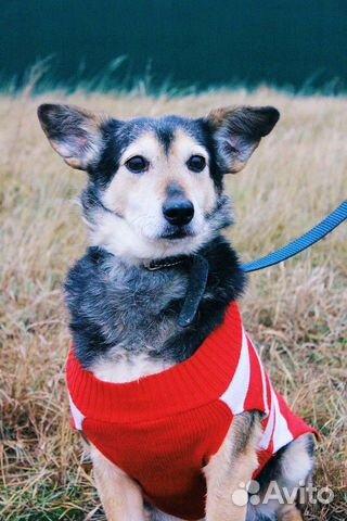 Собака ниже колена в дар купить на Зозу.ру - фотография № 8