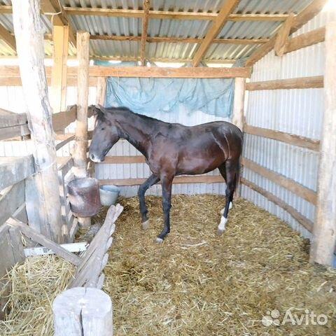 Лошадь  89280884007 купить 2