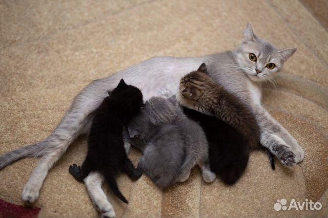 Котята в добрые руки  89383168770 купить 5