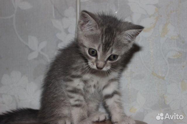Котята  89050840059 купить 3