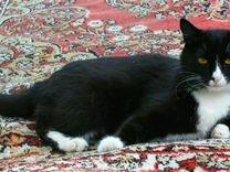 Кошка стерилизованая