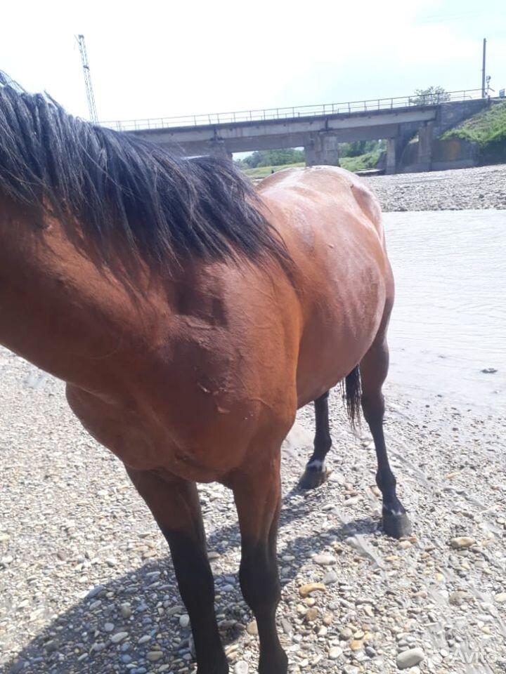 Лошадь  89635969356 купить 1