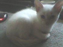 Умный и красивый котенок