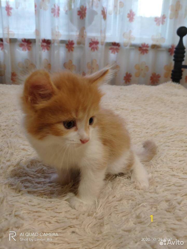 Отдам миленьких котят  89039946144 купить 4
