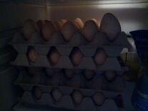 Тушёнка/яйцо столовое индейки