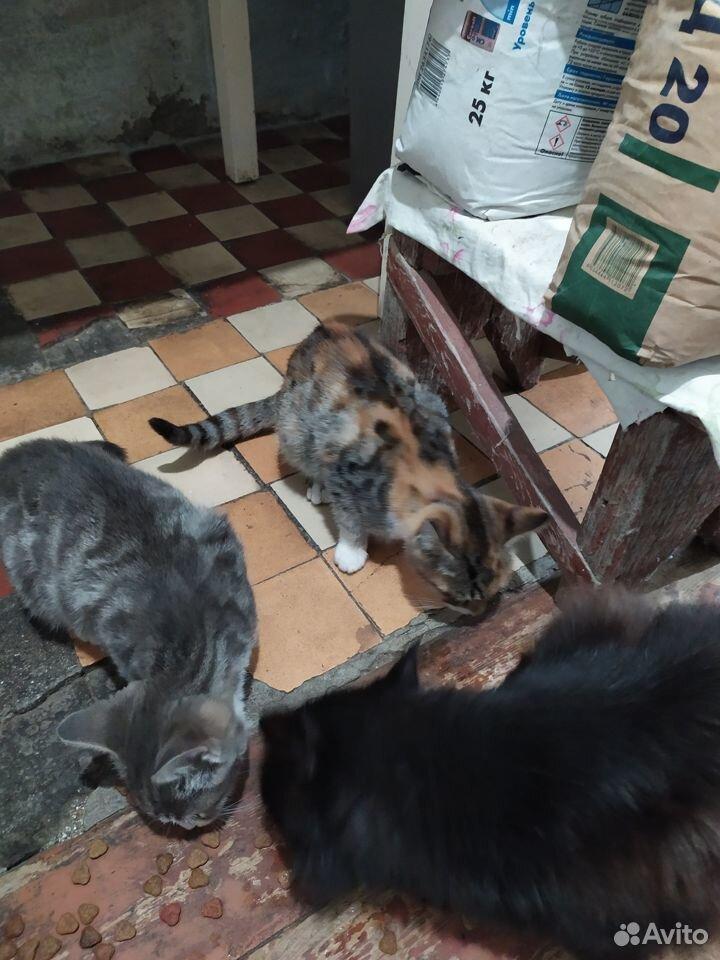 Котятата  89788330796 купить 10