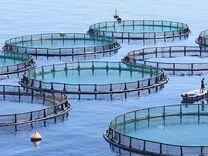 Ищу партнера для разведение рыбы, раков