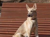 Идеальная собака Ника