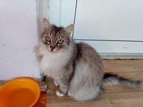 Кошка в дар