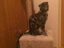 Домик для кошки. Кошкин дом