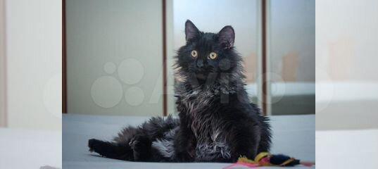Очаровательный котик в добрые руки
